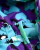 Фото Мембранный комплект Маки Lapland